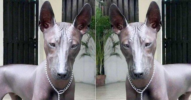 Dziewczyna opublikowała w sieci zdjęcie ze swoim psem. Po jakimś czasie użytkownicy zaczęli dyskutować o tym, czy na zdjęciu żywy pies czy posąg?