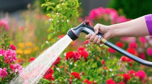 Podlewanie w godzinach wieczornych nie ma sensu: ogrodniczka mówi o sztuczkach podlewania ogrodu