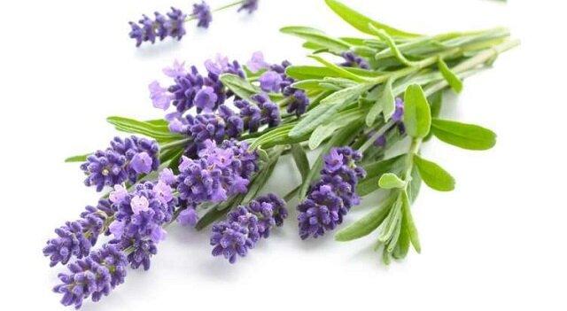 Kwiaty według znaków zodiaku – wybieramy rośliny maskotki