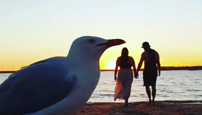 Dzięki mewie romantyczny filmik ludzi zmienił się w bardzo popularny content – to bardzo zabawne
