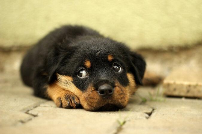 Urodzeni psychologowie: nowe odkrycie dotyczące psów