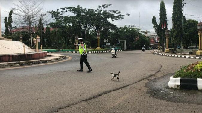 Śliczny dzień: policjant zatrzymał ruch, aby kot przeszedł przez ulicę. Wideo