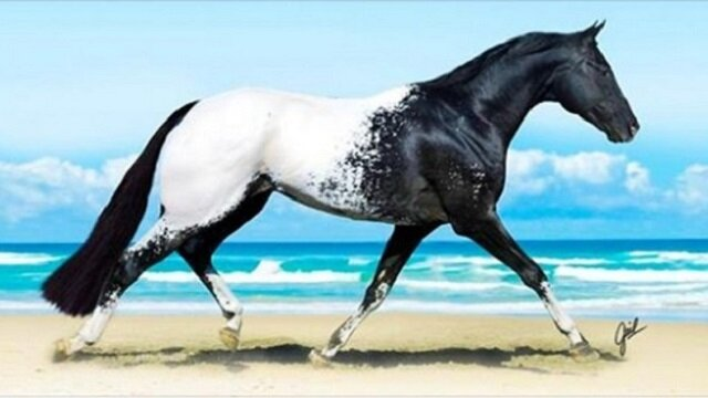 14 zwierząt tak rzadkich, że aż trudno uwierzyć w ich istnienie. Prawdziwe cuda natury