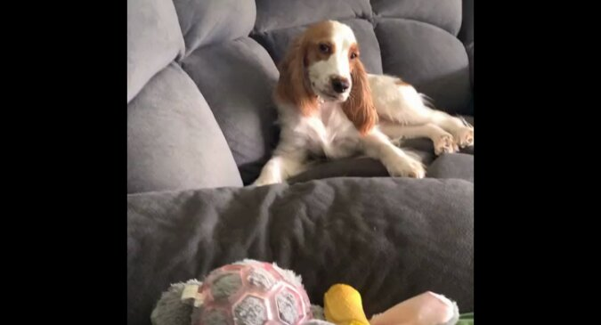 """""""Wiem wszystko o twoich psikusach"""": uśmiech psa patrzącego na właścicielkę podbił sieć. Wideo"""
