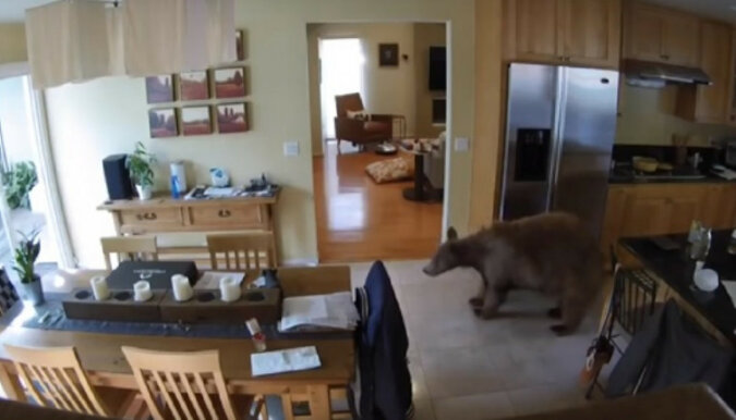 Dwa małe psy wypędziły niedźwiedzia z domu. Wideo