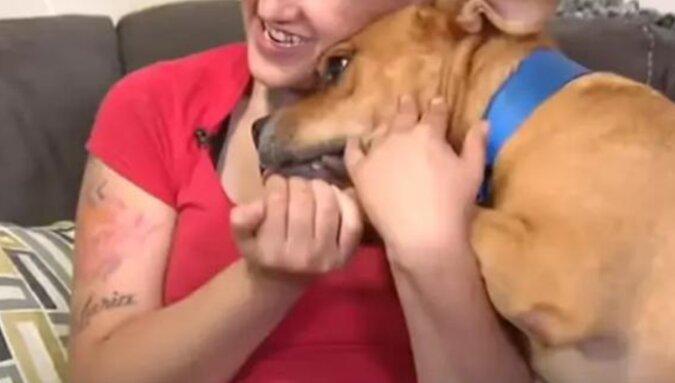 Amerykanka dwa lata później znalazła w schronisku swojego zagubionego zwierzaka
