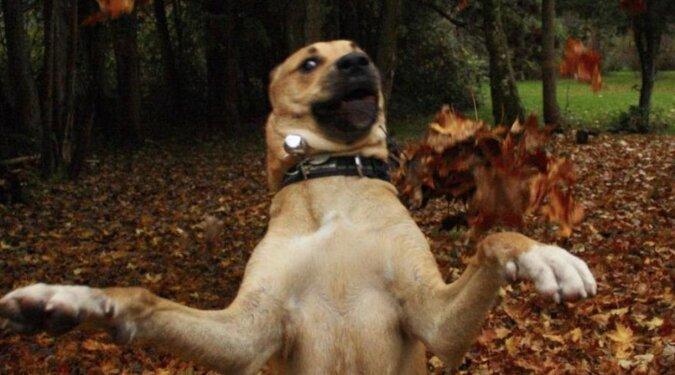 Facet stał się właścicielem chyba najbardziej niezręcznego psa na świecie