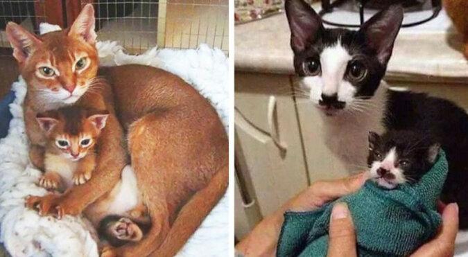 Kocięta, które wyglądają dokładnie jak ich rodzice