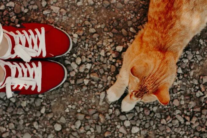 """""""Najbardziej zdziwiony kot"""" został znaleziony w USA - każdy jest niejako zawstydzony jego spojrzeniem"""
