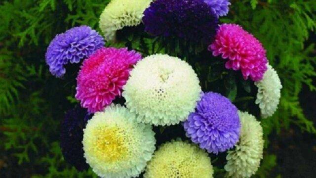 Co warto sadzić w ogrodzie jesienią, aby wiosną ogród kwitł i pokazywał pełnię swojej krasy