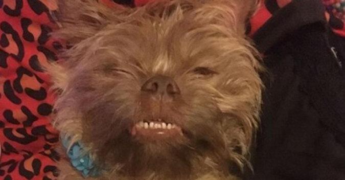 """Pies przeraża właścicieli swoją """"ludzką"""" twarzą"""