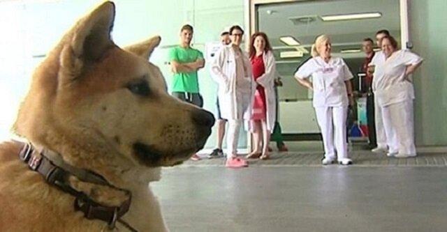 Wierny pies postanowił czuwać pod drzwiami szpitalu, dopóki z niego nie wyjdzie jego właścicielka
