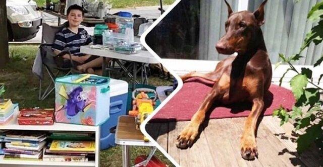 Aby zapłacić za leczenie czworonogiego przyjaciela, dziecko sprzedało wszystkie swoje zabawki