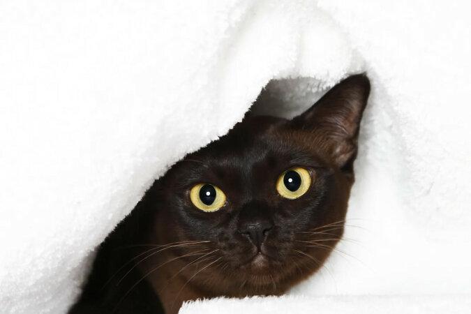 Bezdomny kot nauczył się korzystać z domofonu i trolluje psa. Wideo