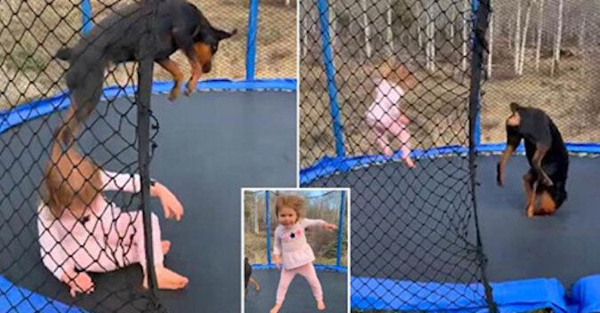 Pytanie, kto jest bardziej zadowolony: dziewczynka i jej pies skaczą na trampolinie
