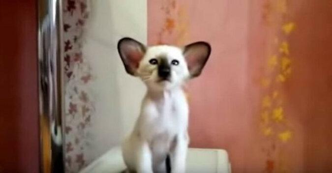 Nie ma na świecie nikogo słodszego od tego kociaka