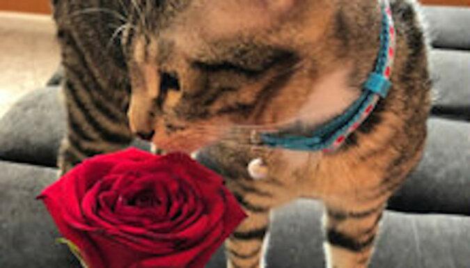 Kot urodził się z czterema uszami, ale nawet to nie przeszkodziło mu w znalezieniu kochającej właścicielki