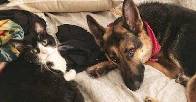 Kot uzdrowiciel: kiedy poczuł, że pies jest chory, zaczął się nim opiekować