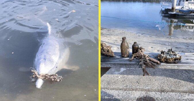 Mieszkający w Australii delfin o imieniu Mystic bardzo tęsknił za ludźmi podczas kwarantanny