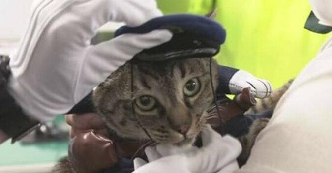 Japońska kotka została szefem policji w podziękowaniu za uratowanie człowieka