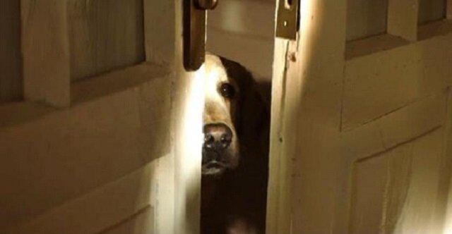 Krótki, ale poruszający filmik o psach. Twórca ma nadzieję, że wideo zmieni podejście ludzi
