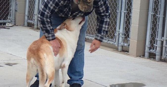 Gdy ten człowiek się o tym dowiedział, po prostu rozpłakał się ze szczęścia: pies ze schroniska ponownie spotkał się z właścicielem