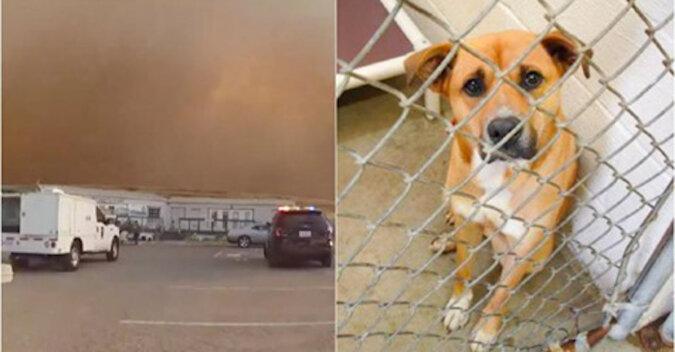 Policja szybko wyprowadzała zwierzęta ze schroniska, aby uchronić je przed ogniem