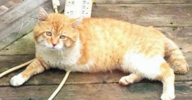 Bezdomny trójnogi kot przynosił ludziom szczęście