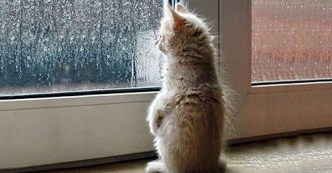 Puszyste zwierzaki: koty, czekające na swoich właścicieli z pracy