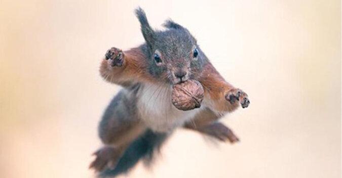 Ogony, orzechy i niesamowite skoki: projekt fotograficzny o rudych wiewiórkach
