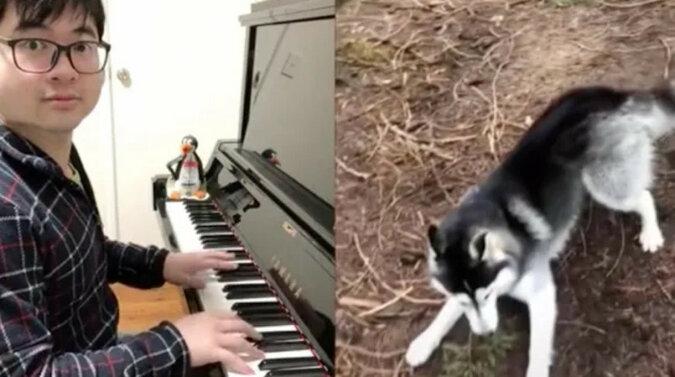 Mężczyzna zaczął grać na pianinie zwierzętom i stał się sławny na TikTok. Wideo