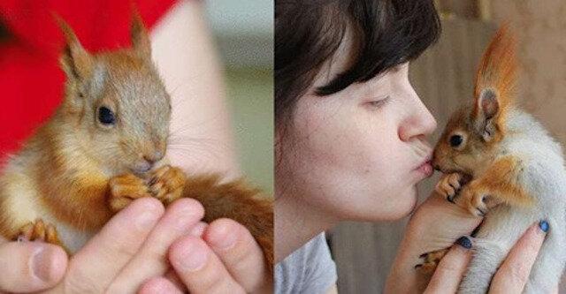 Dziewczyna zaopiekowała się małą wiewiórką, a teraz ma uroczego puszystego przyjaciela