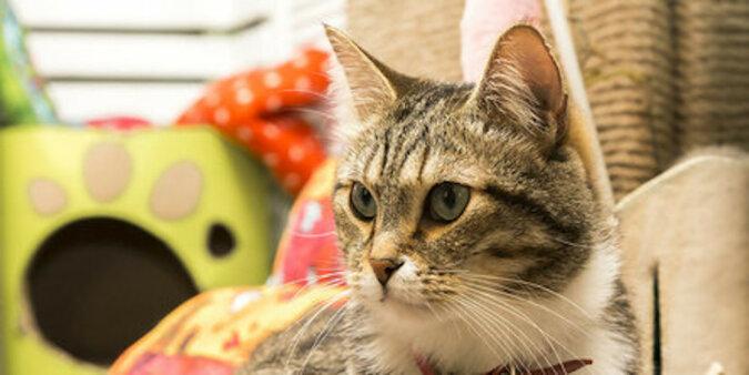 W Turcji kotka przyprowadziła swoje chore kocięta bezpośrednio na izbę przyjęć. Wideo
