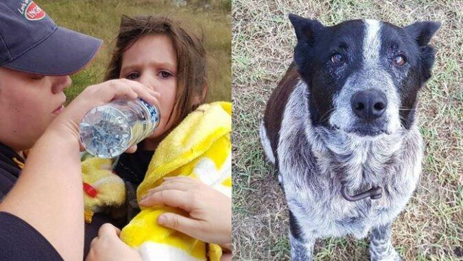 Stary i ślepy pies pilnował zaginioną dziewczynkę przez 17 godzin