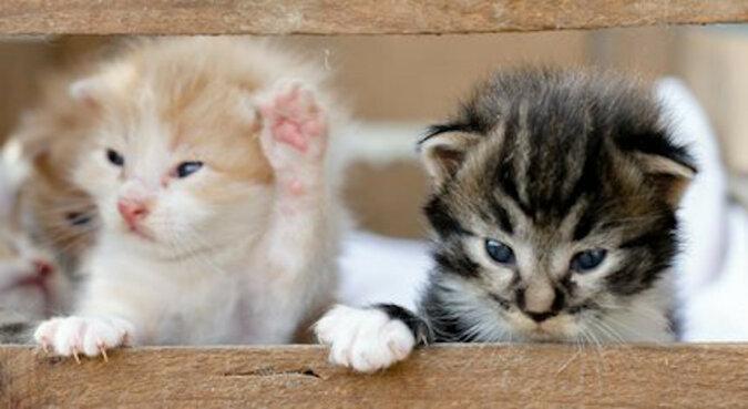 Bezdomna kotka urodziła w mieszkaniu nieznajomego. Tak wygląda 3 lata później