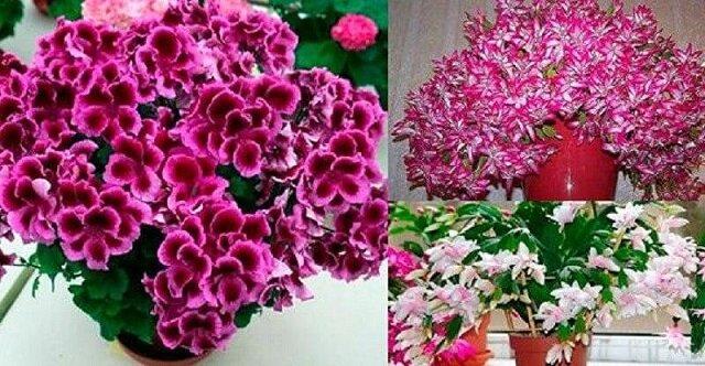 Proste triki, dzięki którym będziesz długo się cieszyć kwiatami doniczkowymi