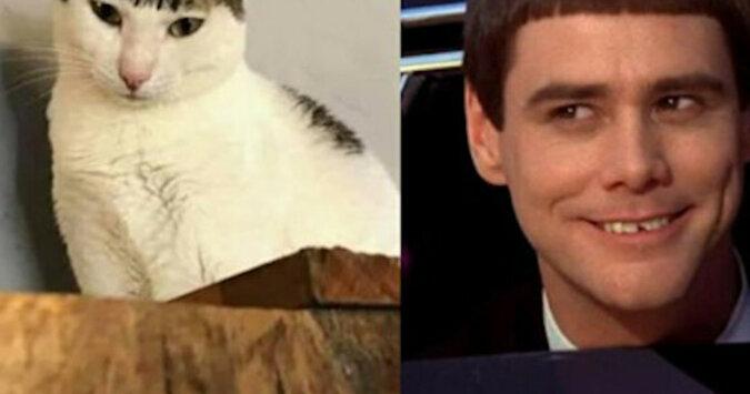 Internautów rozbawił kot, który ma nietypowe umaszczenie - śmieszną grzywkę