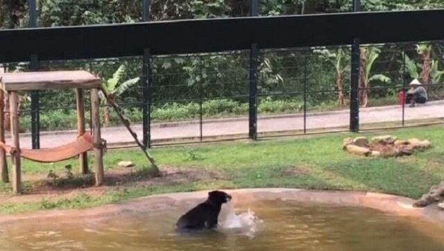 Niedźwiedź przez wiele lat żył w ciasnej klatce, zobacz co zrobił gdy wypuszczono go na wybieg. Piękne