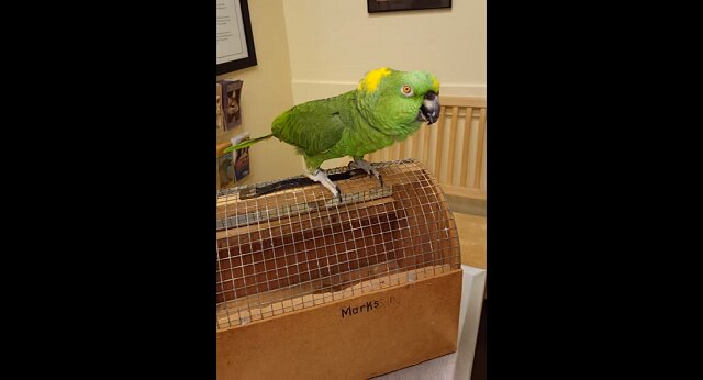 Papuga wybucha złowrogim śmiechem, od którego robi się niedobrze. Wideo