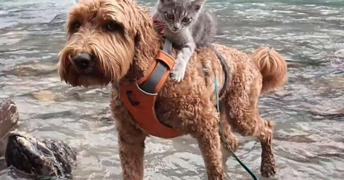 """""""Zatrzymaj się!"""" - krzyknęła gospodyni, ale piesek niósł już na grzbiecie bezdomnego kociaka"""