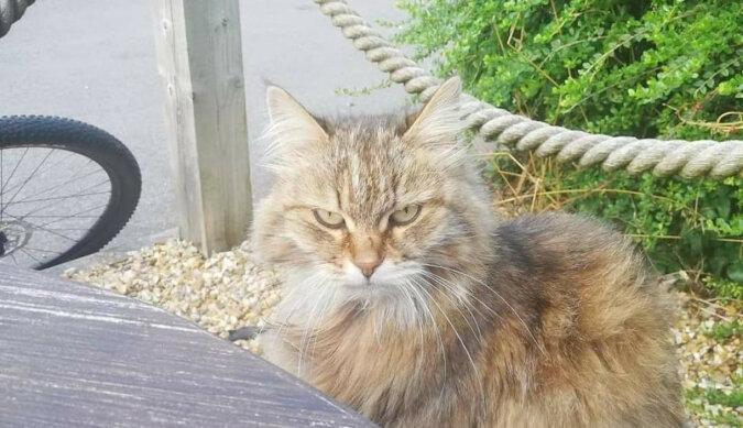 11-letnia kotka regularnie odwiedzała lokalną restaurację mięsną w poszukiwaniu jedzenia, dopóki ktoś nie zawiesił kartki na obroży