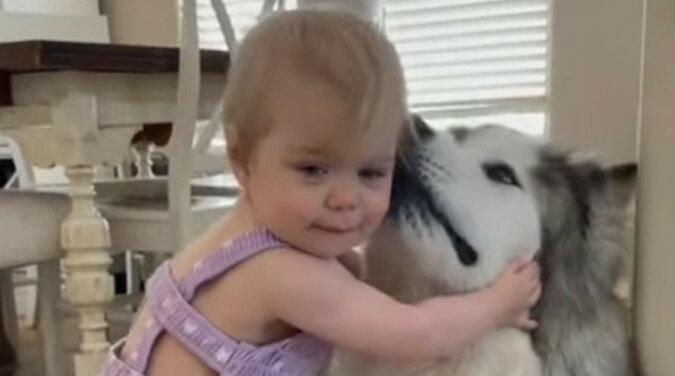 Dziewczynka bardzo chciała przytulić psa dwa razy większego od niej – urocze wideo