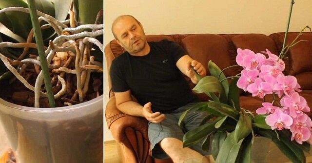 Jak pielęgnować storczyki w domu