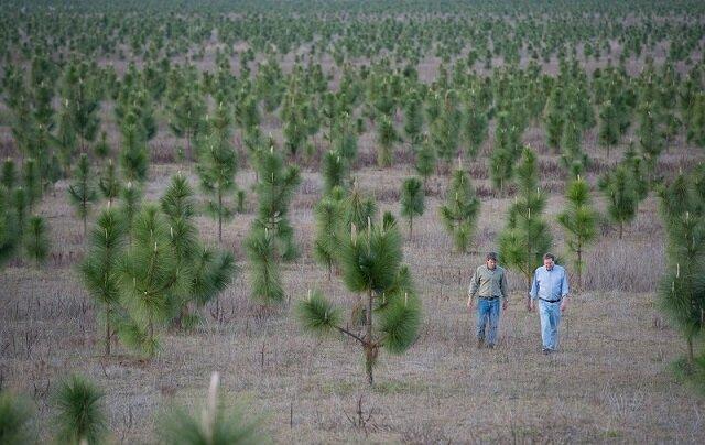 Mężczyzna posadził 8 milionów drzew, aby przywrócić las wycięty w latach 30