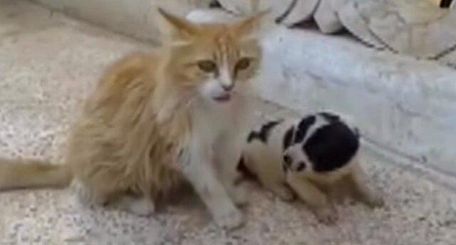 Kotka usłyszała, że osierocony szczeniak płacze. Jej reakcja była po prostu cudowna