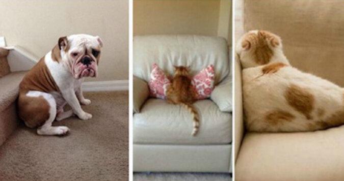 Tak wyglądają ulubione zwierzaki, które są bardzo obrażone