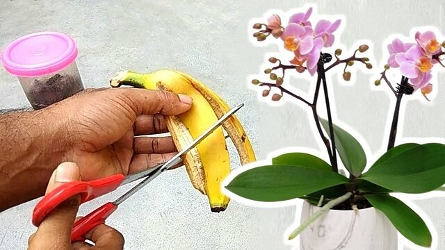 Jak zrobić prosty, naturalny i skuteczny nawóz ze skórki banana