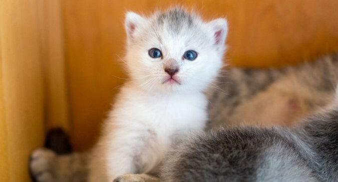 """""""Moja kochana"""": kotek pogłaskał właścicielkę z miłością i zauroczył wszystkich. Wideo"""