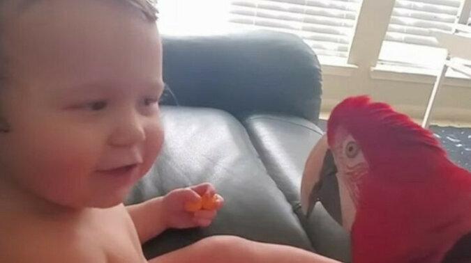 Papuga poznaje dziecko. Wideo