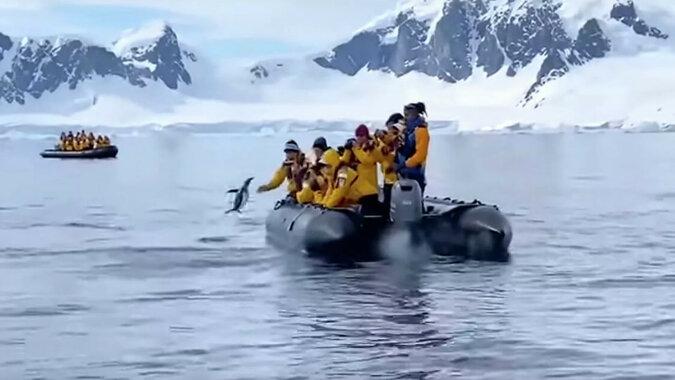 Na Antarktydzie pingwin uciekł przed orkami oceanicznymi, wskakując do łodzi z turystami